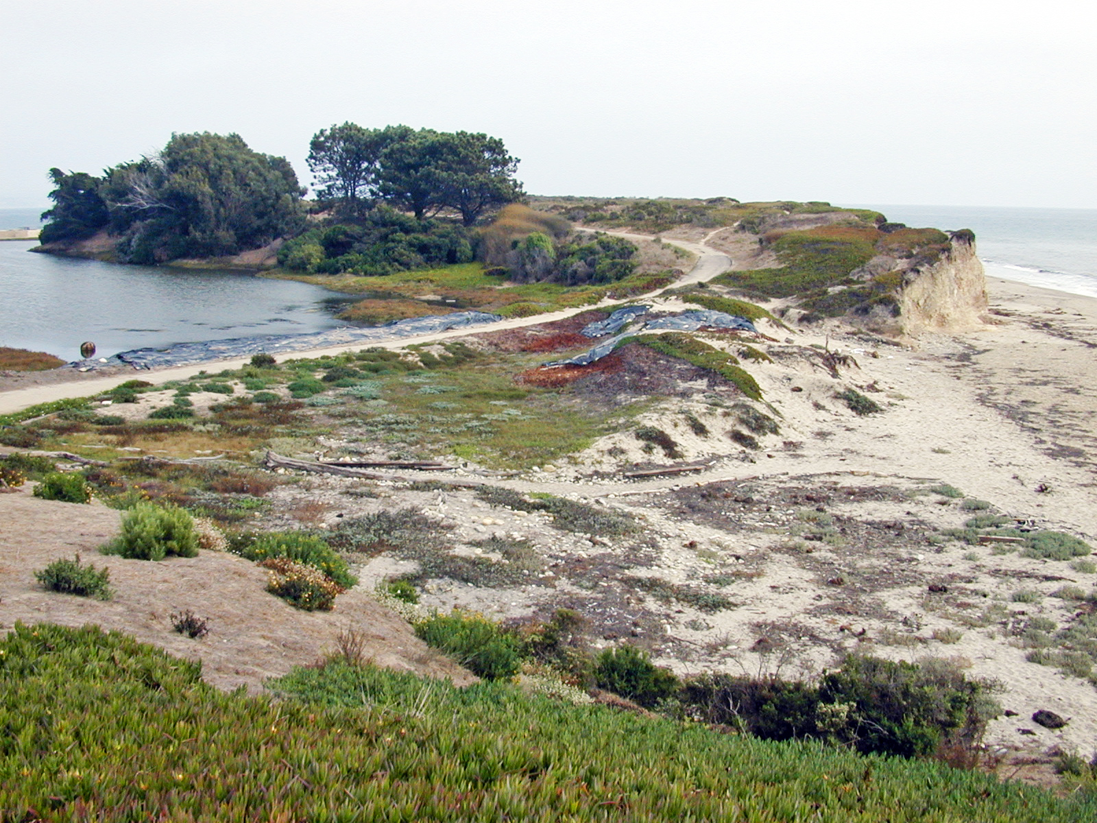coastal dunes Coastal dunes are massive accumulations of sand created and constantly changes by the power of the wind and sea coastal dune ecosystems are extremely fragile, they are susceptible to both natural and human-induced change.