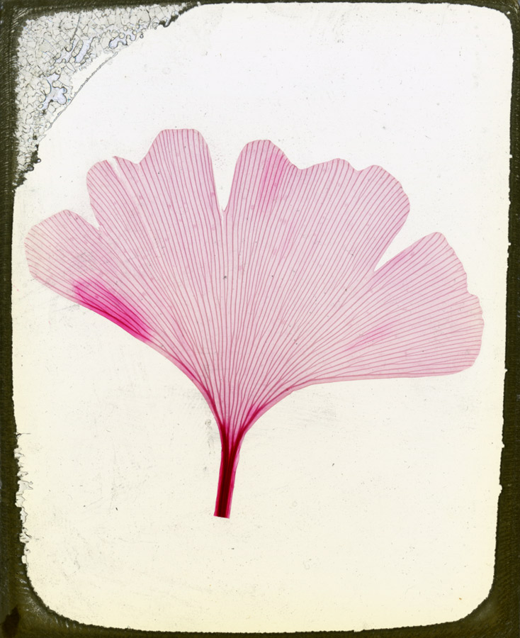 A Career in Botany | CCBER