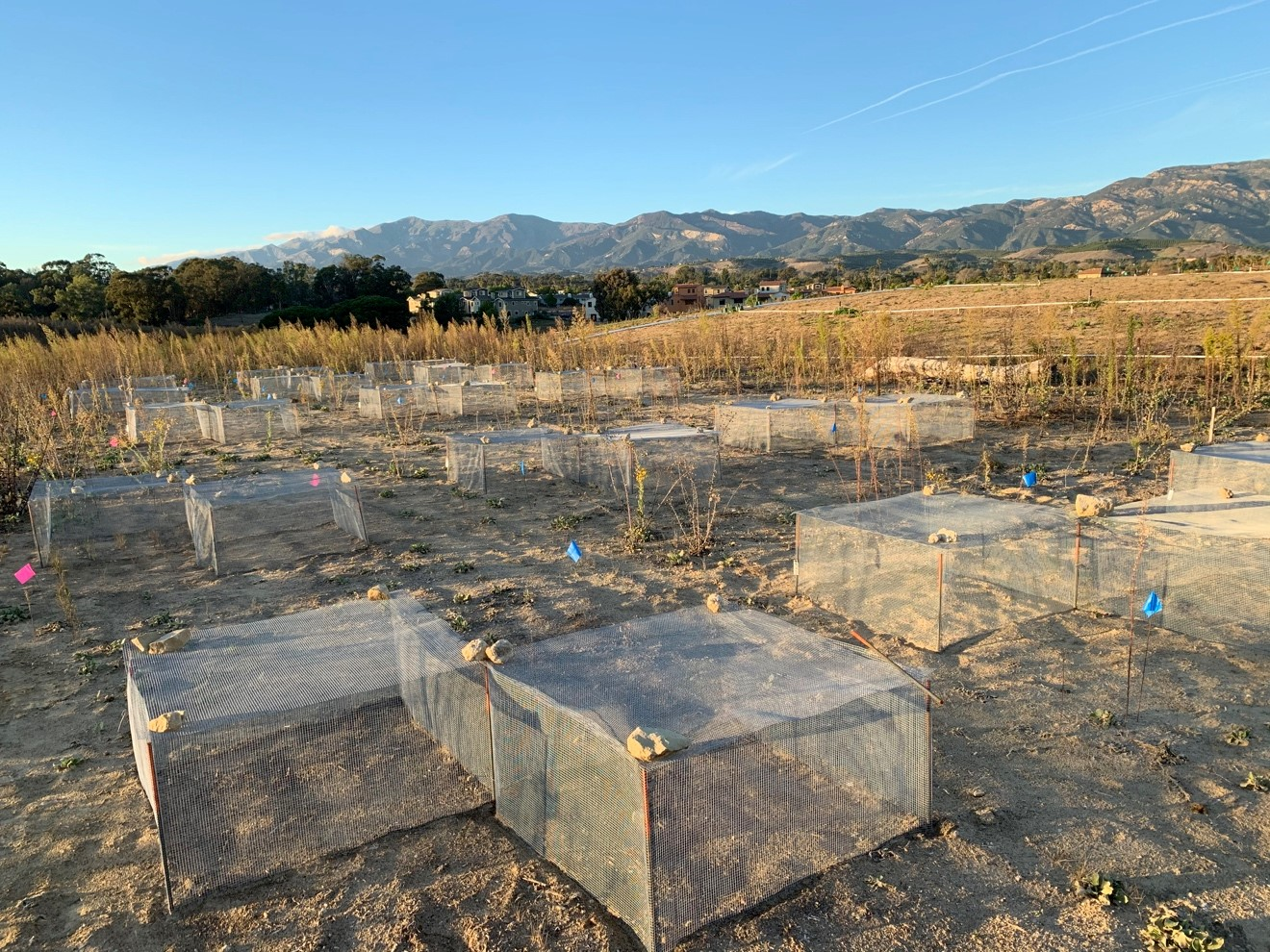 Experimental plots with cages on the eastern slope (left image) and sandy soils on the western side (right image) of the NCOS Mesa.