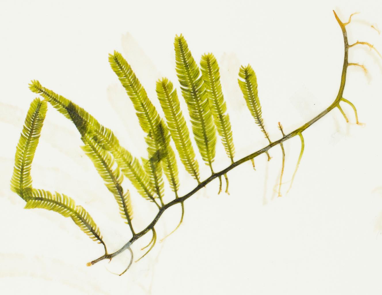 Invasive Species | CCBER