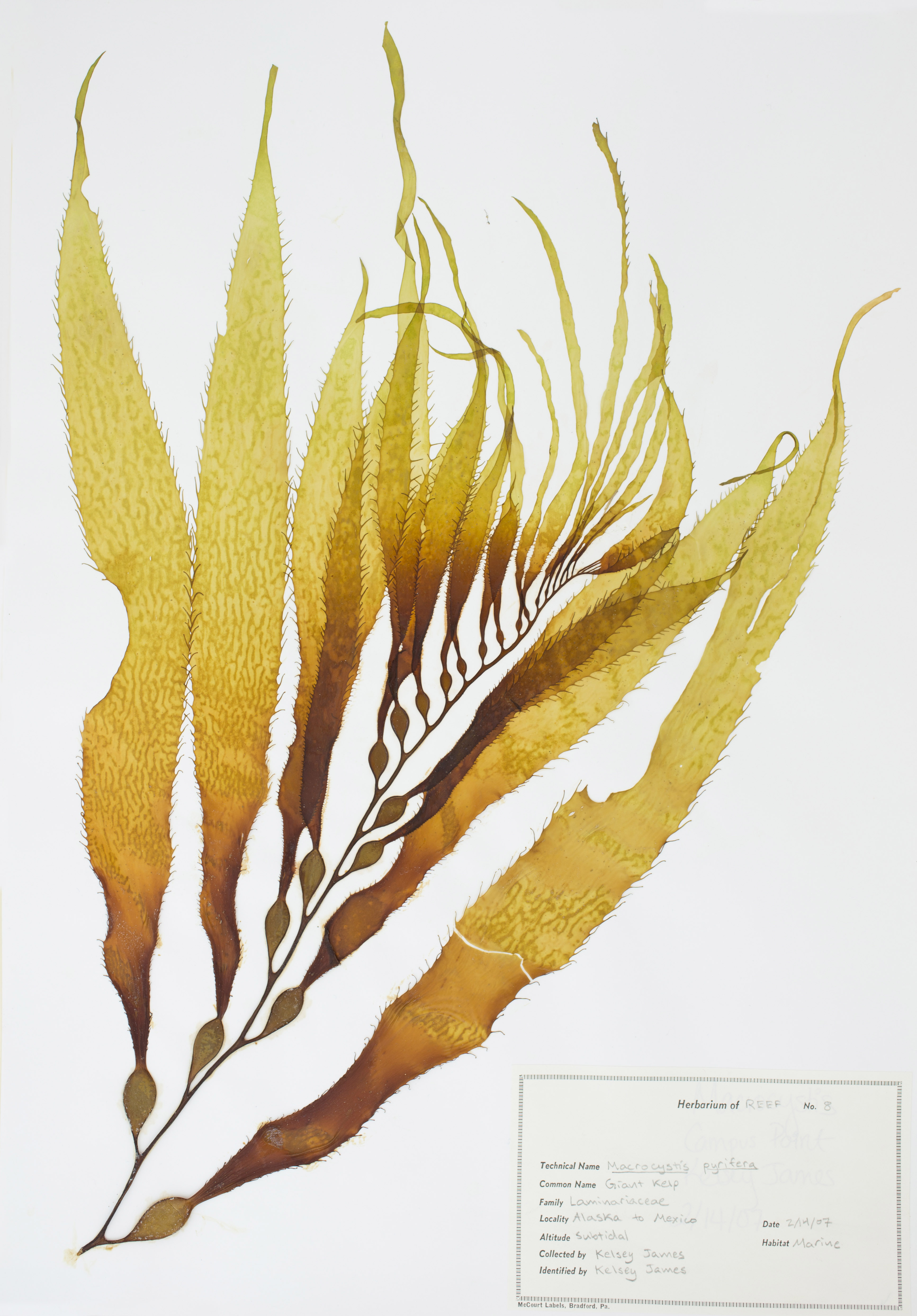 plant research papers View plant tissue culture research papers on academiaedu for free.