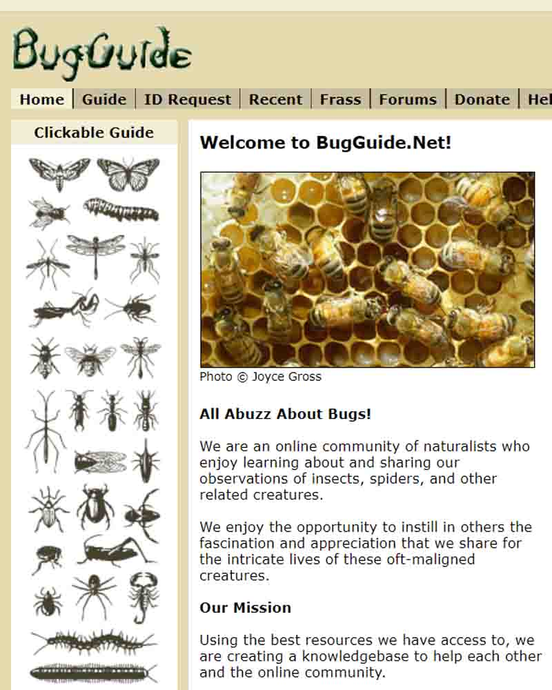 Ophionine Wasps of California | CCBER